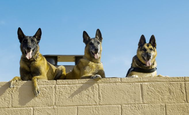 Roc, Kisma and Jampy take a rest at the military working dog kennels. (U.S. Air Force photo/Staff Sgt. Jason Colbert)