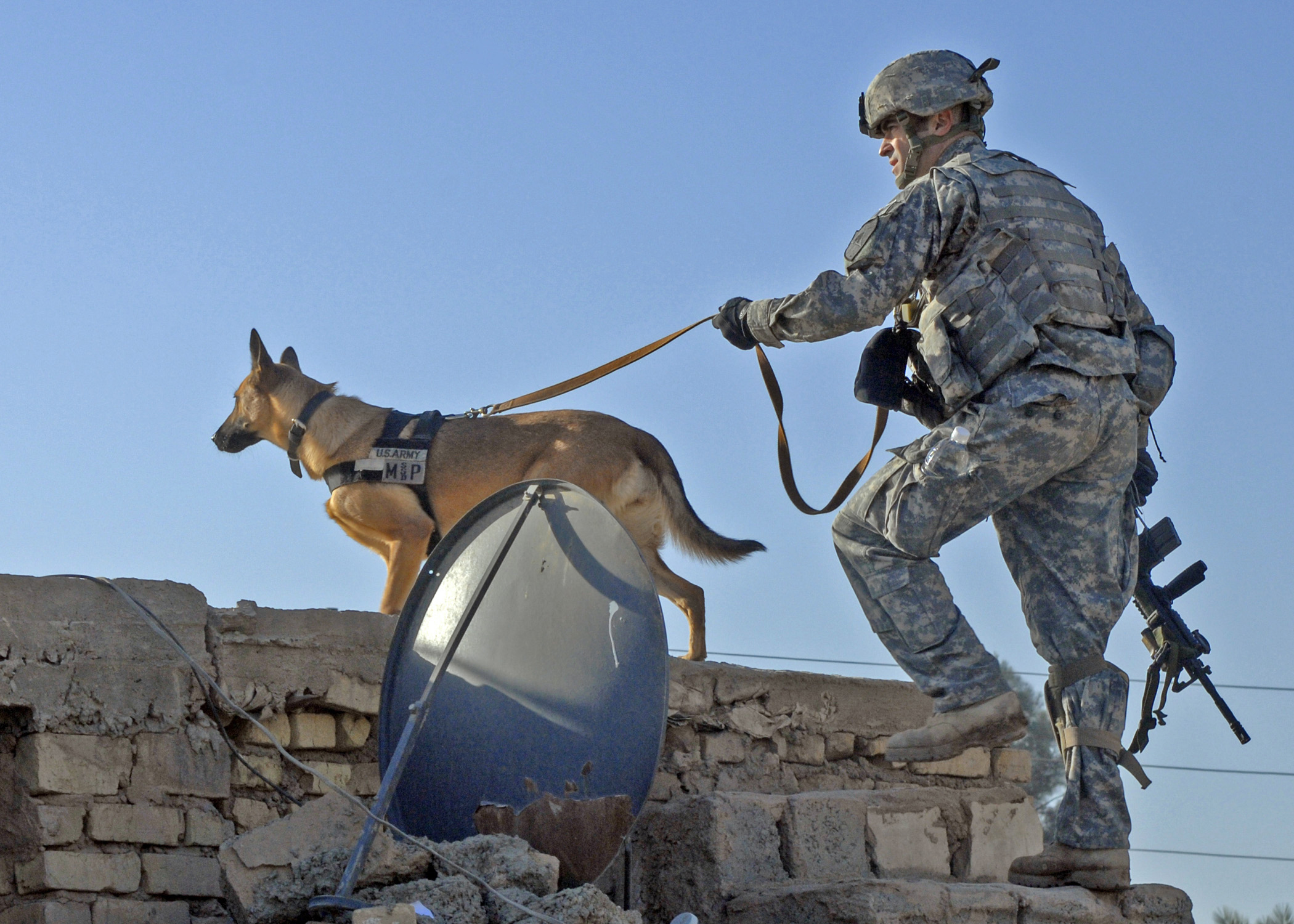 Who decides military dog names? - Four Legged Soldiers